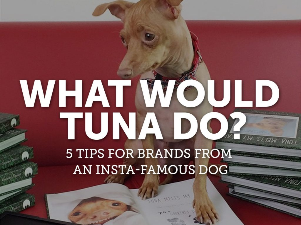 tuna-the-dog
