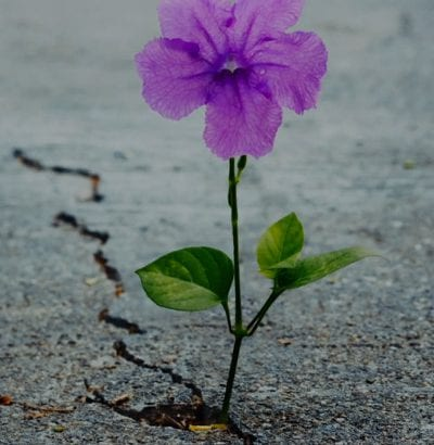 flower grows from crack in concrete